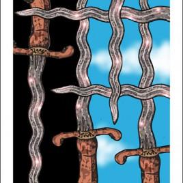 6 of Swords – Knowledge